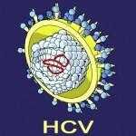 hcv_virus-150×150