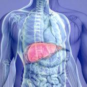 Con l'obesità fegato grasso in aumento