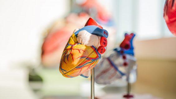 28:09:21Malattie cardiovascolari